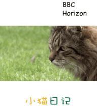 BBC地平线:小猫日记